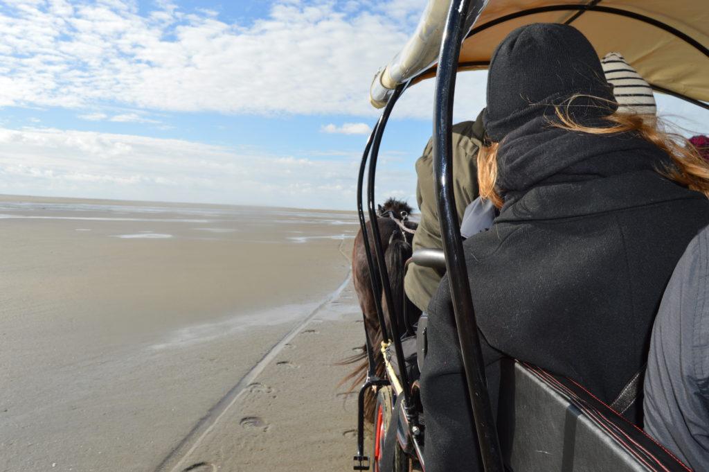 sorties calèche sur la plage au Crotoy