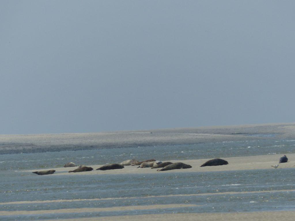 location cottage de la mer une location idéale pour aler voir les phoques