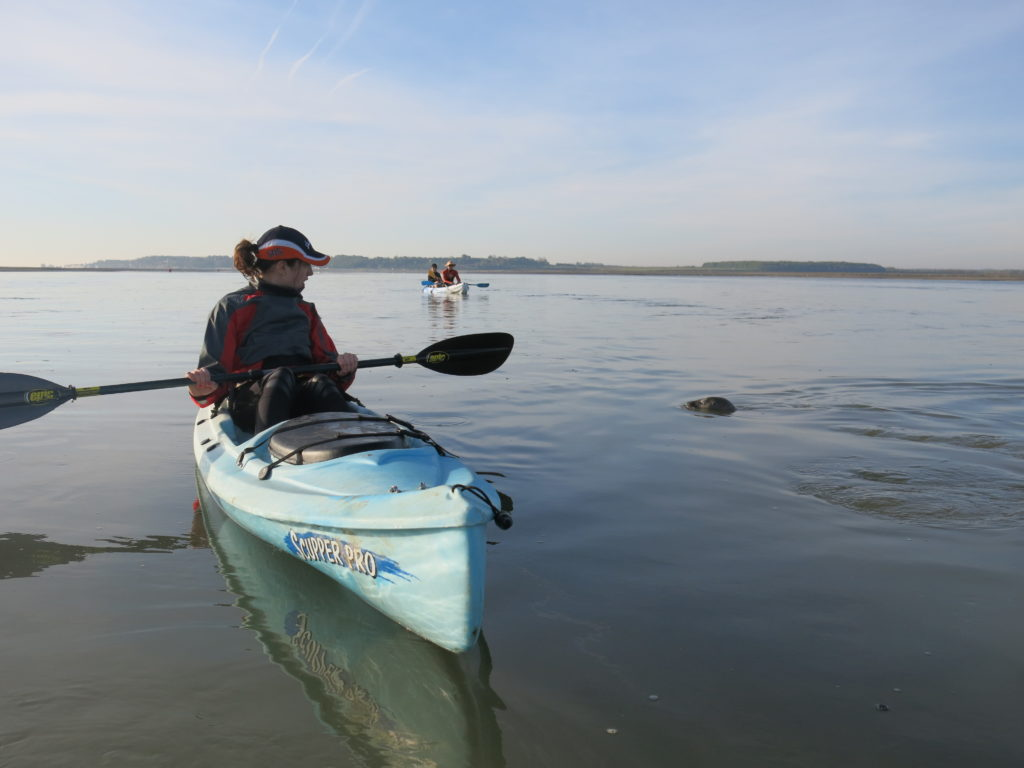location de kayaks et paddles pour voir des phoques