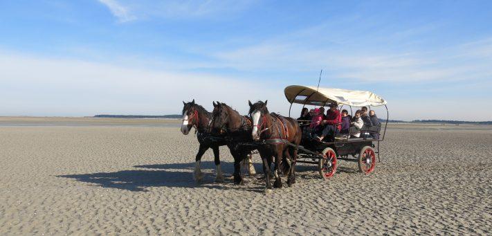 chevaux et calèche au Crotoy
