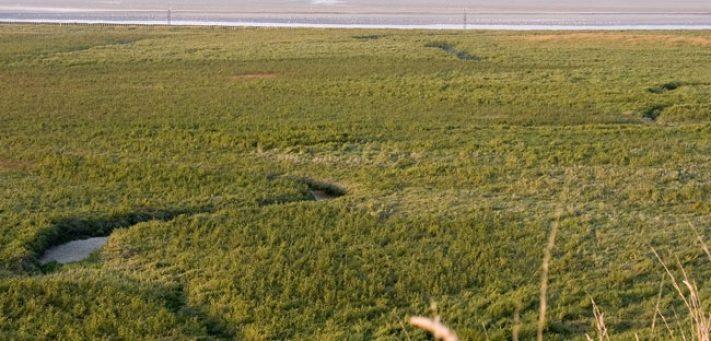 molières en baie de somme  prés-salé